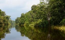 Rivière Amazonie