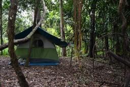 Amazonia, Pacaria Samiria
