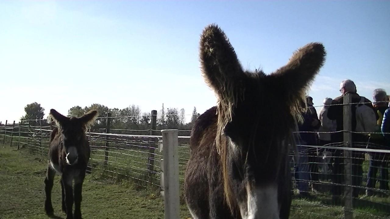"""Sans nom-1 18/12/19 - Le dicton du jour """"  à Mirebeau des ânes ils en passent plus qu'ils en restent """" .... lol"""