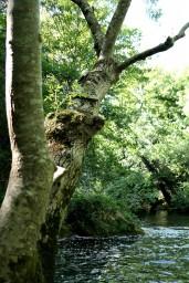 Garrigues, Forêts, Montagnes ,Animaux et Histoire 14/06/20