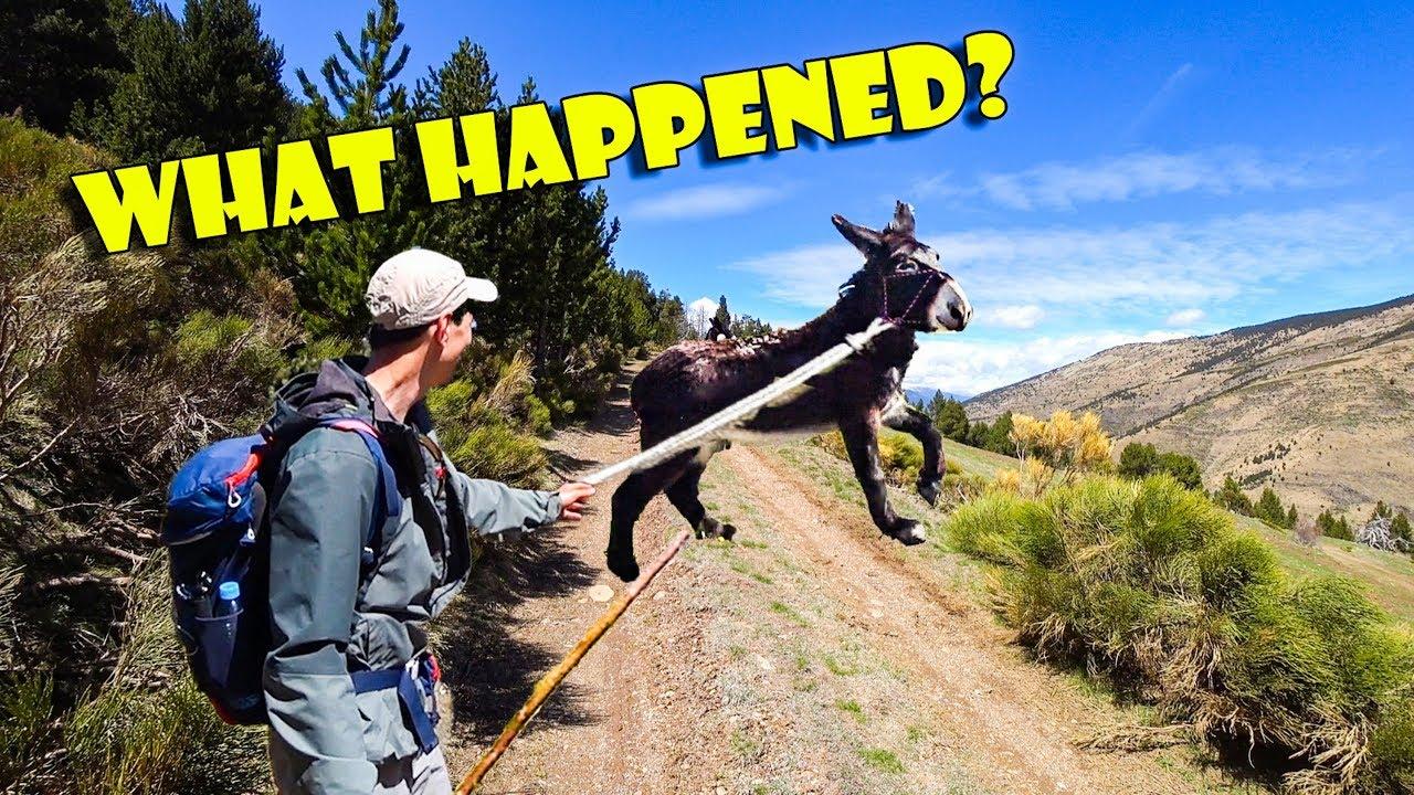 L'âne s'est échappé de nous?! | Randonnée folle avec l'âne sauvage énorme