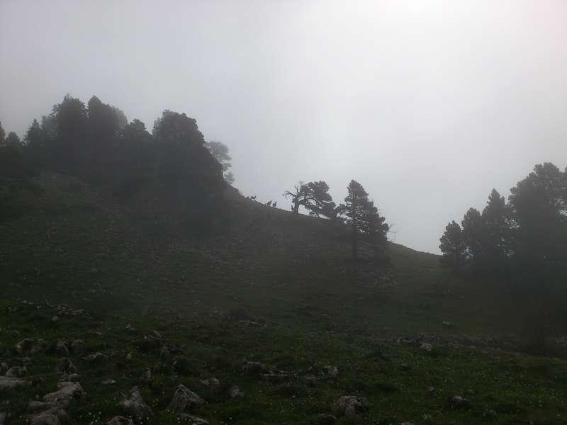 Brouillardbouquetins.jpg