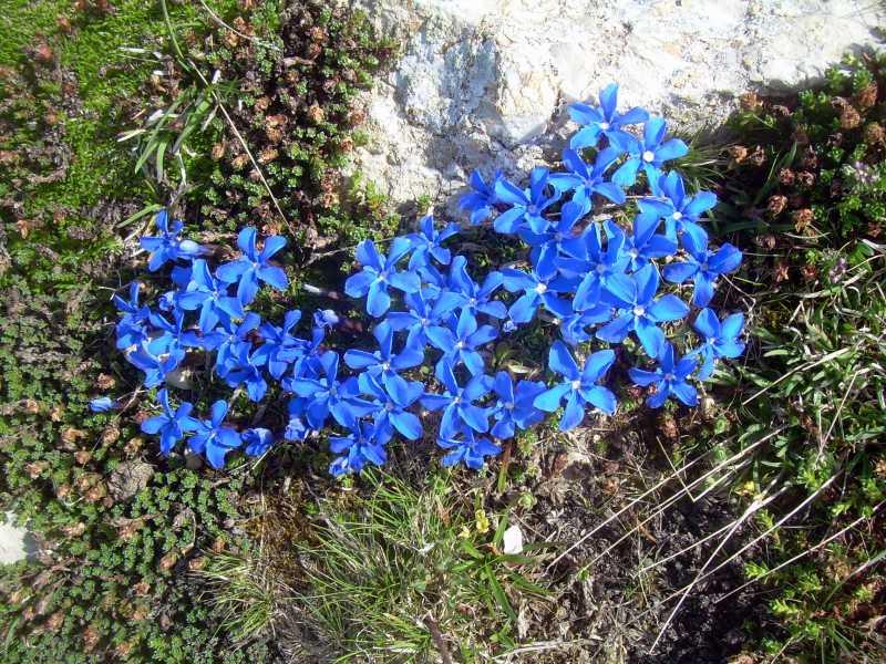 Fleurs60.jpg
