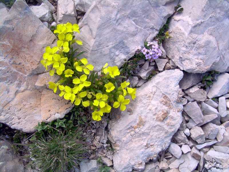 Fleurs61.jpg
